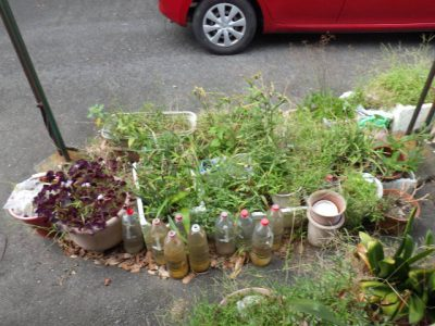 植木の処分 一宮市